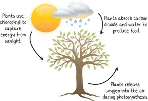 Carbon cycle essay - Expert Academic Writing Help You Can